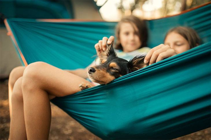 camping with your dog checklist