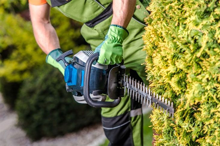 the best petrol hedge cutters