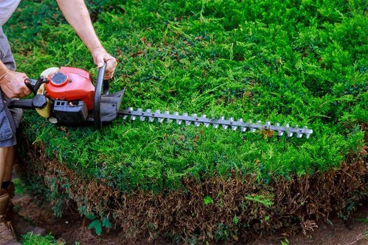 best petrol hedge trimmer for thick branches