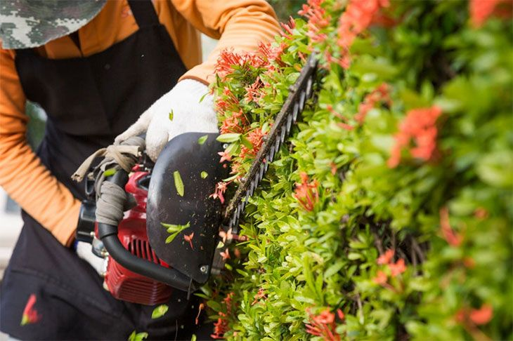 stihl brush cutter for brambles
