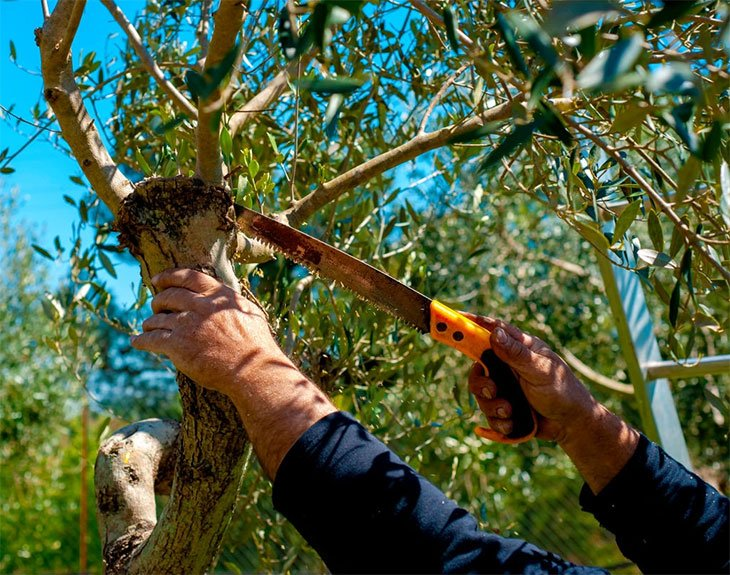 the best tree pruning saw