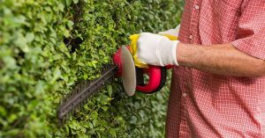 Enjoy Gardening With the Best Brush Cutter for Brambles