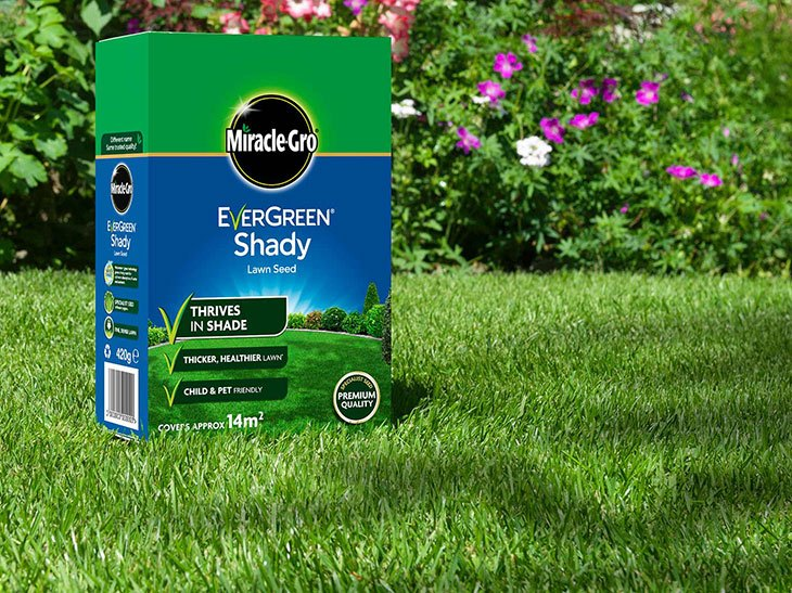 best moss killer for artificial grass