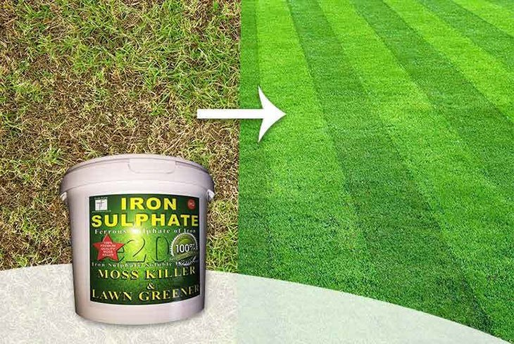 best moss and weed killer for lawns