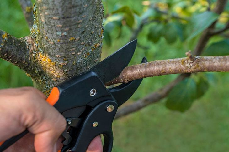 best quality garden secateurs